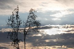 Bright Sun Sky Trees and Clouds in Evening. In Summer stock photo