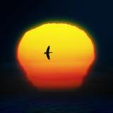 Bright sun on sunset sky Stock Photos
