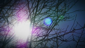 Bright Sun through Tree Branches. Bright sunlight with lens flare, shining through tree branches. HD 1080p time-lapse stock video footage