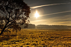 Bright Sun With A Tree On The Field. Sunny morning landscape with tree and forest on the horizon Stock Photos