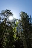 Bright Sun and trees Royalty Free Stock Photography