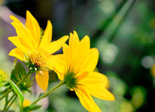 Bright sun and yellow flowers.  Royalty Free Stock Image