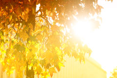 Bright sunburst through leafy tree Stock Images