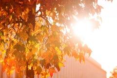 Bright sunburst through leafy tree Royalty Free Stock Image