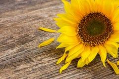 Bright sunflower Royalty Free Stock Photo