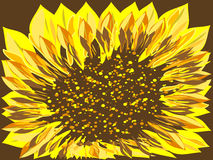 Bright Sunflower flower brown background large Royalty Free Stock Photos
