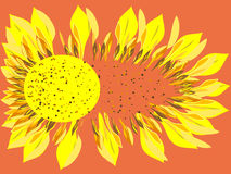 Bright Sunflower flower scatters Stock Photo