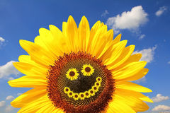Bright sunflower with smiling face Royalty Free Stock Images