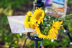 Bright sunflowers lie on an easel painter stock photos