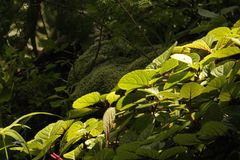 BRIGHT SUNLIGHT ON GREEN LEAVES WITH RED VEINING stock photography