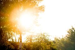 Bright sunlight penetrates through leaves of tree. For design royalty free stock photos