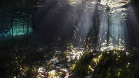 Bright Sunlight and Shadows in Mangrove Forest. Beams of sunlight shine into a dark mangrove forest in Raja Ampat, Indonesia. This tropical region is known for stock video footage