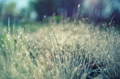 Bright Sunlight summer grass with dew drops. Soft Focus. Stock Photos