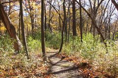 Bright sunlight through the trees on a woodland path. Bright sunlight falls through the branches of the trees that have lost most of their leaves on an autumn Royalty Free Stock Image