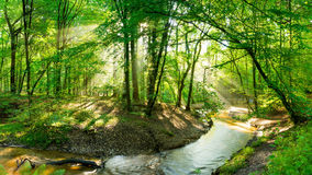 Brook running through sunlit forest. Bright sunlit forest with with one tree leaning across a brook (stream) flowing through the woods Royalty Free Stock Photography