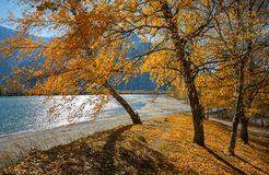 Bright Sunny Autumn Landscape With Group Of Birches With Golden Yellow Foliage On A Hill At The Background Of Mountains. Autumn Mo. Untain Landscape With Lake stock images