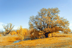 Bright sunny autumn landscape. With yellow trees and shrubs Stock Photo