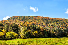 Bright sunny autumn in the mountains Stock Photo