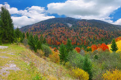 Bright sunny autumn in the mountains Royalty Free Stock Image