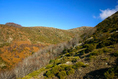 Bright sunny autumn in the mountains Royalty Free Stock Photo