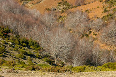 Bright sunny autumn in the mountains Royalty Free Stock Photography