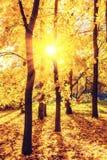 Bright sunny autumn park. Colorful autumn park at sunny day Stock Photo