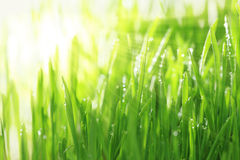 Bright sunny background with grass and water droplets Stock Photo