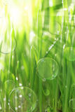 Bright sunny background with wet grass Royalty Free Stock Photography