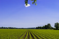 Bright Sunny Day. Field and Sky Stock Image