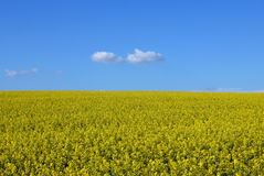 Bright sunny day in the field. Summer sunny day in a field under the blue sky Royalty Free Stock Photo
