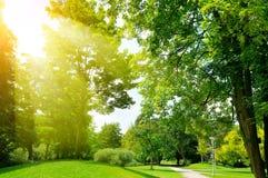 Bright sunny day in park. Sun rays illuminate green grass and tr. Bright sunny day in park. The sun rays illuminate green grass and trees royalty free stock image