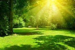 Bright sunny day in park. The sun rays illuminate green grass. And trees royalty free stock photos