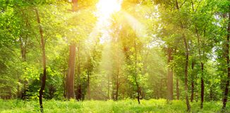 Bright sunny day in park. The sunrays illuminate green grass and trees. Bright sunny day in park. The sun rays illuminate green grass and trees royalty free stock photo
