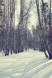 Bright sunny day in a winter birch forest Royalty Free Stock Photo