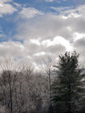 Bright, sunny early December day in New Hampshire in a snowy forest. Blue sky, puffy, white clouds, barren oak trees stock images