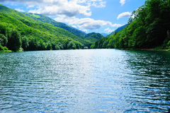 Bright sunny forest lake Stock Images