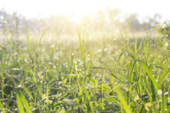 Bright sunny lush grass field under blue sunny sky. Outdoor coun. Trye meadow nature Stock Photography