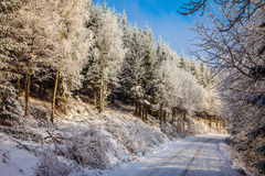Bright and sunny morning in snowy forest Stock Images