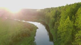 Bright sunny rays falling on green forest by river. Stock footage. Warm sunlight falls on beautiful dense forest with