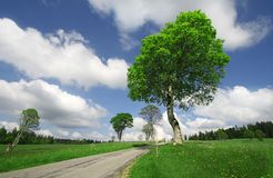 A Bright Sunny Summer Day. With a green tree and blue skies. Concept -to take the summer trip Royalty Free Stock Image