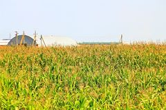 Beveled haystack, summer, straw wrapped on the field stock image