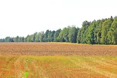 Beveled haystack, summer, straw wrapped on the field royalty free stock photo