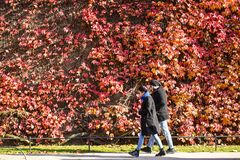 Bright sunny weather in London with Autumn colours royalty free stock image