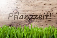 Bright Sunny Wooden Background, Gras, Pflanzzeit Means Planting Season Royalty Free Stock Images