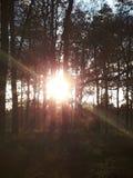 Bright Sunrays Stock Image