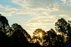 Bright sunrise over tall trees. A beautiful Florida sunrise morning over tall trees lighting up the morning sky stock images