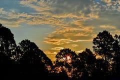 Bright sunrise over tall trees. A beautiful Florida sunrise morning over tall trees lighting up the morning sky stock photos