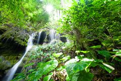 Bright sunrise shining through the branches of tropical trees on the waterfall and lush plant. Pure ancient tropical forest in royalty free stock images