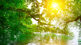 Bright sunrise on shore. Of picturesque lake royalty free stock images