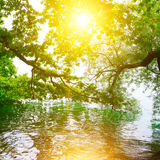 Bright sunrise on shore. Of picturesque lake royalty free stock photos